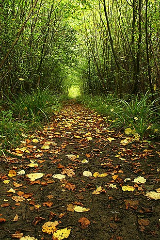 Foxley Wood - Woodland Pathway at Foxley Wood