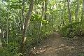 Forest in Mt.Ashio 04.jpg