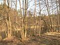 Forest near Brda River.JPG