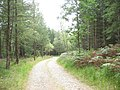 Forest road - geograph.org.uk - 542610.jpg