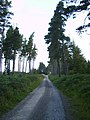 Forestry road in Langdale Forest - geograph.org.uk - 527780.jpg