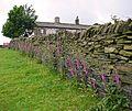 Foxgloves, Headley (3672984468).jpg