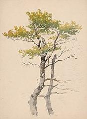 Study of Deciduous Tree