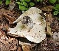 Fungi (44733457315).jpg