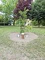 Gábor Georgiades memorial tree, 2020 Százhalombatta.jpg