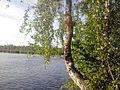 G. Novouralsk, Sverdlovskaya oblast', Russia - panoramio (193).jpg