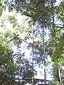 Gardenology.org-IMG 0715 rbgs10dec.jpg