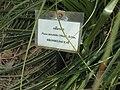 Gardenology.org-IMG 7438 qsbg11mar.jpg