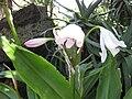 Gardenology.org-IMG 9675 rbgm10dec.jpg
