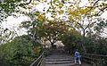 Gifu Castle , 岐阜城 - panoramio (11).jpg