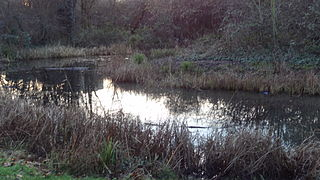 nature reserve in the London Borough of Islington