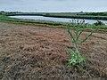 Glinki pow. Poznan, plant (4).jpg