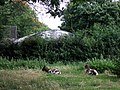 Goats in Clissold Park - geograph.org.uk - 1602927.jpg