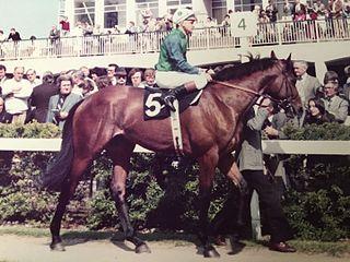 Golden Fleece (horse) American-bred Thoroughbred racehorse