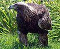 Golden eagle IMG 3700.JPG