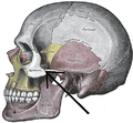Gray188-Zygomaticotemporal suture.png