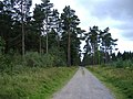 Great Haldon Forest - geograph.org.uk - 1458357.jpg