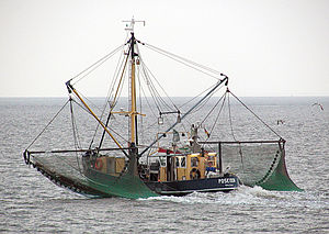 Commercial fishing - Commercial crab fishing