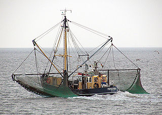 Commercial fishing economic activity