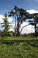 Grounds of Ickworth House - geograph.org.uk - 1221198.jpg