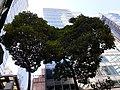 HK 上環 Sheung Wan 皇后大道中 Queen's Road Central Saturday morning December 2019 SS2 22.jpg