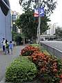 HK Causeway Road trees sidewalk Pavement Act Now banners.JPG