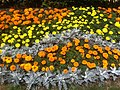 HK Central 禮賓府 Government House 開放日 Open Day flowers in orange n Yellow April-2012.jpg