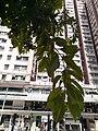 HK SYP 西環 Sai Ying Pun 德輔道西 Des Voeux Road West October 2020 SS2 09.jpg