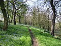 Half Moon Wood, Kirkthorpe, Wakefield - geograph.org.uk - 356400.jpg