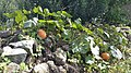 Harvest Festival in countryside - vegetable 3rd.jpg