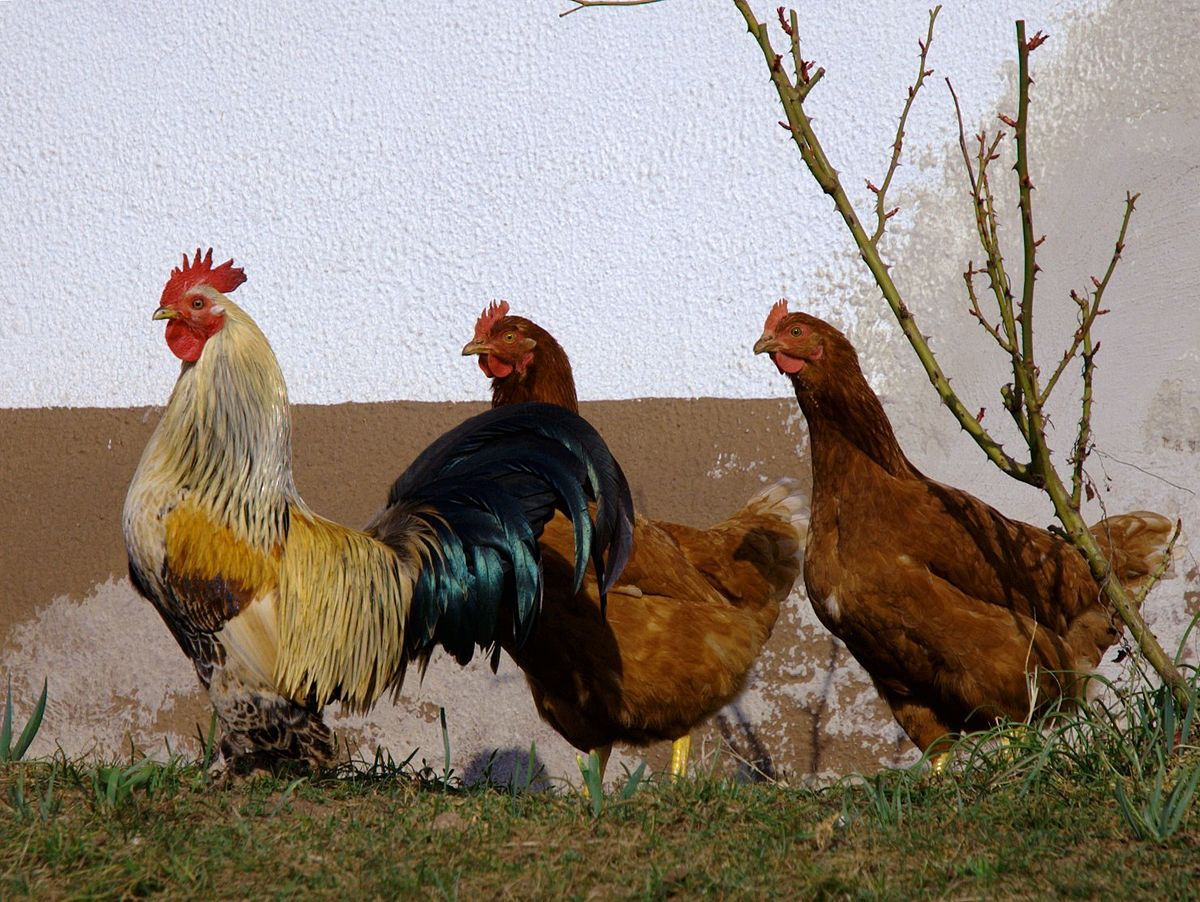 3 store haner