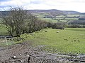 Hedge Line and Sheep Pasture - geograph.org.uk - 363868.jpg