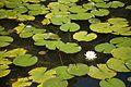 Heian Jingu 平安神宮 (KYOTO-JAPAN) (4951392996).jpg