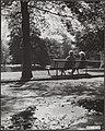 Herfst, parken, Bestanddeelnr 047-0740.jpg