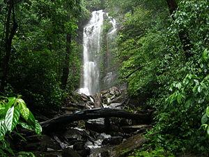 Arashinagundi falls situated in Kodachadri