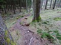 Hiking trail in direction of the Erlenbach-Spring.jpg