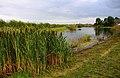 Hill Farm fishing lake near Appleford - geograph.org.uk - 1451708.jpg
