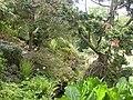 Hinton Admiral, rock garden - geograph.org.uk - 1295411.jpg