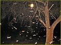 Hochzeitflug der Termiten 1.jpg