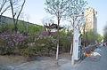 Hohhot.stations velos et parc.jpg