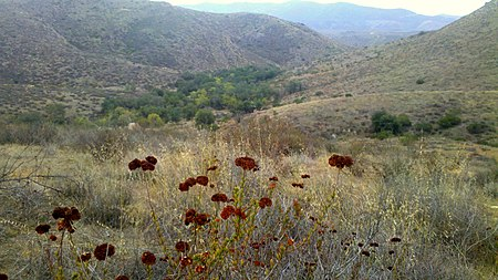 Hollenbeck Canyon Wildlife Area - Wikipedia