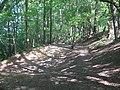 Hollow on footpath in Oldbury Woods - geograph.org.uk - 1321143.jpg