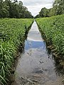 Holme Fen, Cambridgeshire (48092344502).jpg