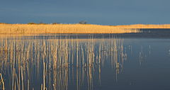 Hommikune Inahamne järv (ver 2).JPG