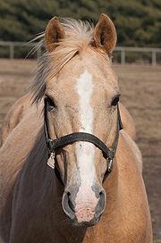 Horse headshot 4409.jpg