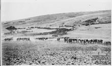large columns of horses in an arid, hilly landscape
