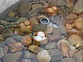 Hot Sping Chiangrai By HS3CMI - panoramio - CHAMRAT CHAROENKHET (26).jpg