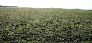 Curragh - The Curragh plain