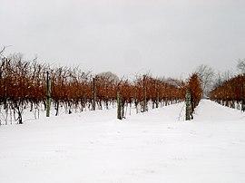 Ice wine Niagara Falls canada.jpg