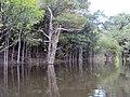 Igapó ilha do Severino Urucurituba Amazonas - panoramio (5).jpg